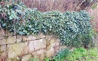 Meet the Expert: Boundary Wall Repair and Maintenance with Stonecraft