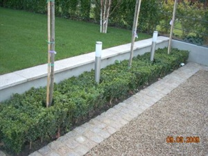 hedge with lights idea