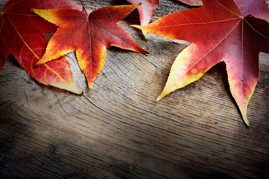 5 Home Improvements Tips for Autumn