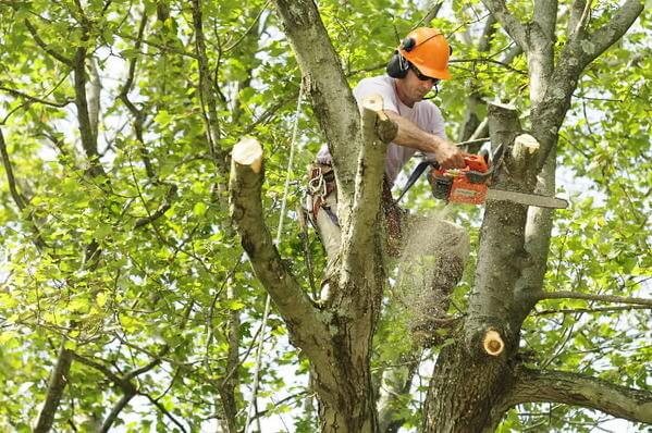 Meet the Expert – Tree Removal Services with Olympian Landscaping